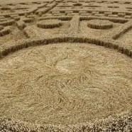 Crops circles – Nous en créons pour vous parler d'amour et d'harmonie