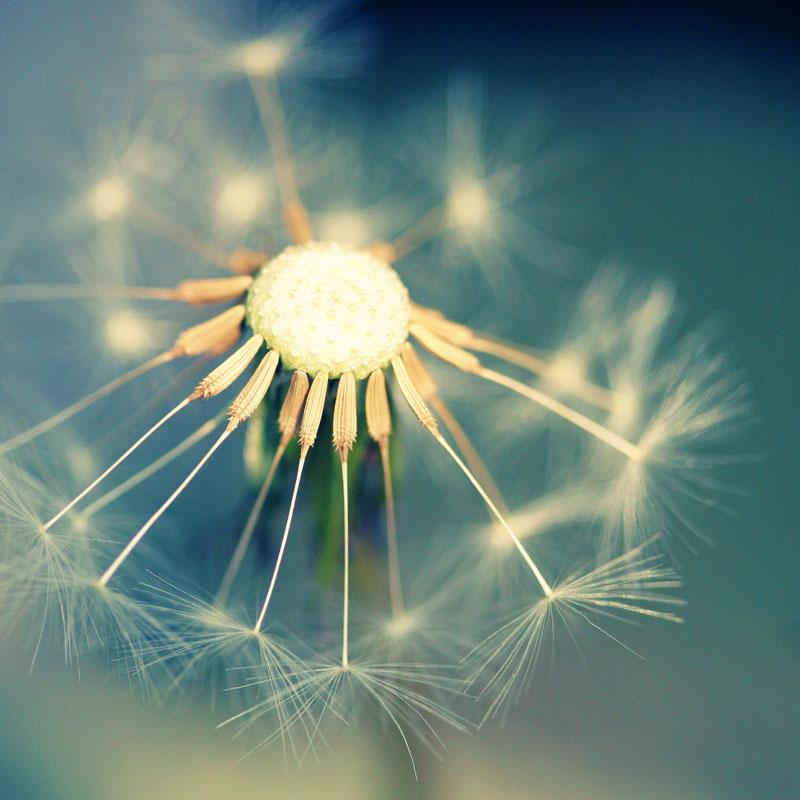 L'intuition… partie divine en chacun de nous qui nous permet de comprendre que nous sommes UN