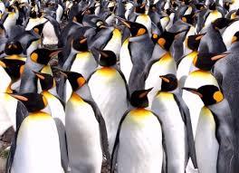 Ne faites plus les pingouins d'une société en mal d'amour et de lumière !